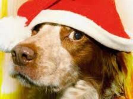 Les chiens et nous ... Décembre
