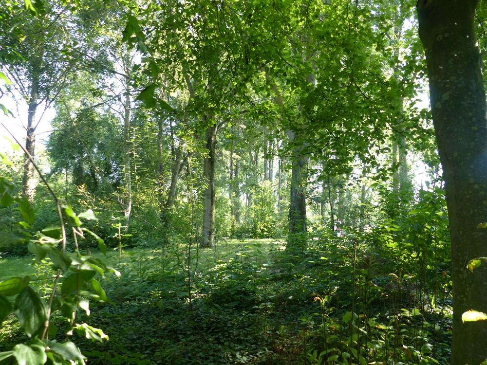 De l'ombre, des arbres, de l'air