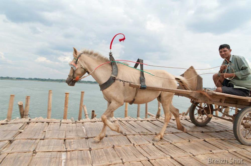 pont  bambou cheval, cambodge