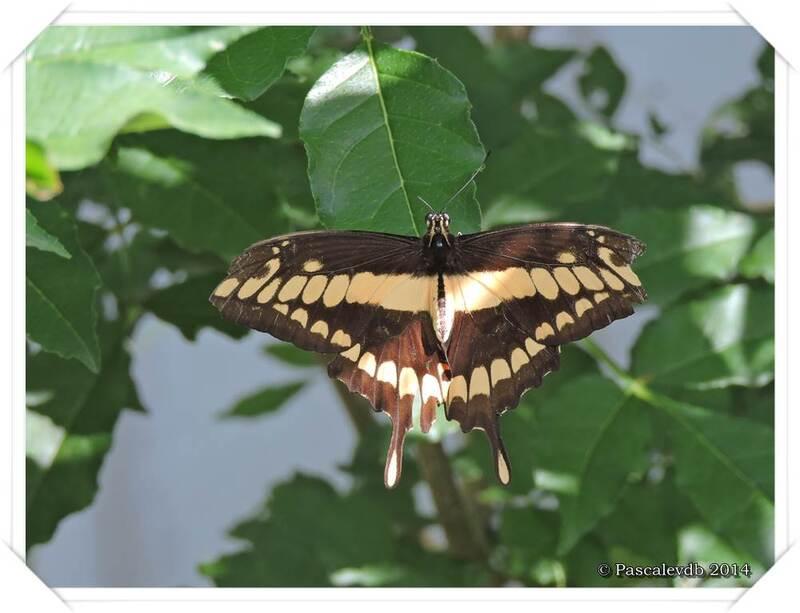 Au Paradis du Papillon à Sanguinet - 9/10