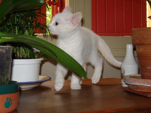 Je suis un chat de Natsume SOSEKI