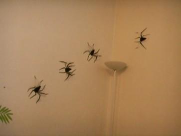 Hallo-araign--es.JPG