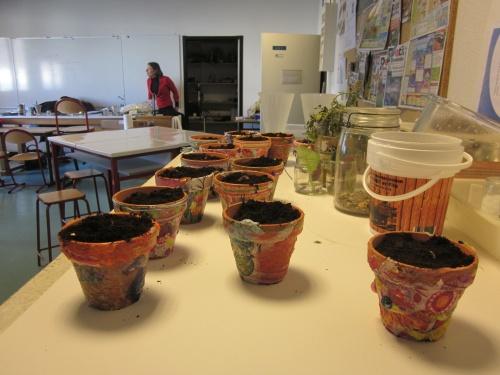 Plantation de bulbes à l'intérieur