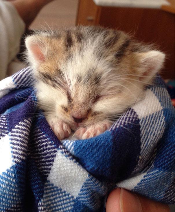 Les Petits Félins 2:  20 images d'adorables petits félins...