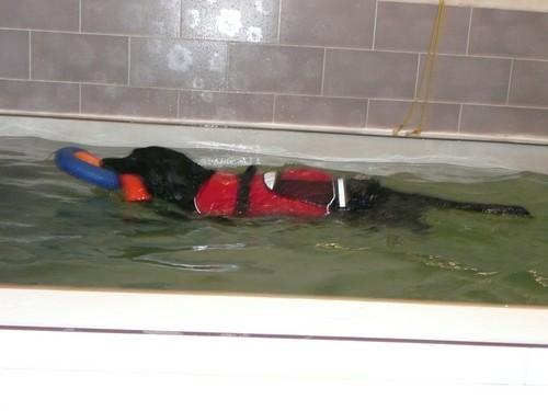 ermes piscine 2