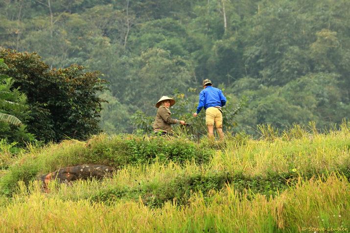 Rizières de la réserve naturelle de Pu Luong, Viêt Nam