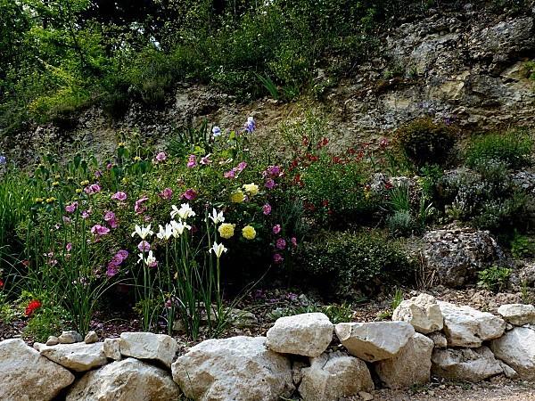 Iris Hollande blanc