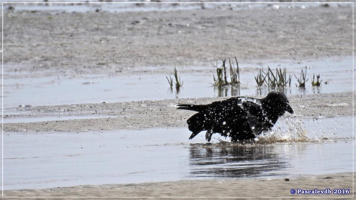 En longeant la plage entre Lanton et Cassy - fin Mars 2016 - 3/8