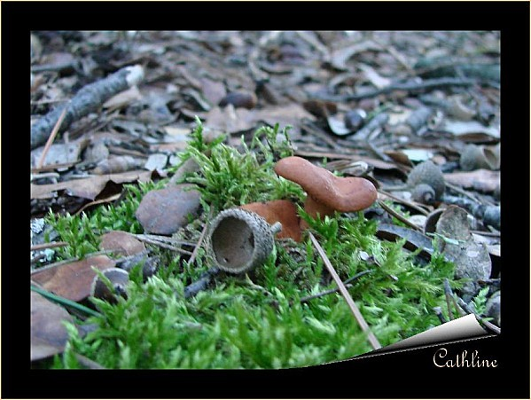 champignon-1.jpg