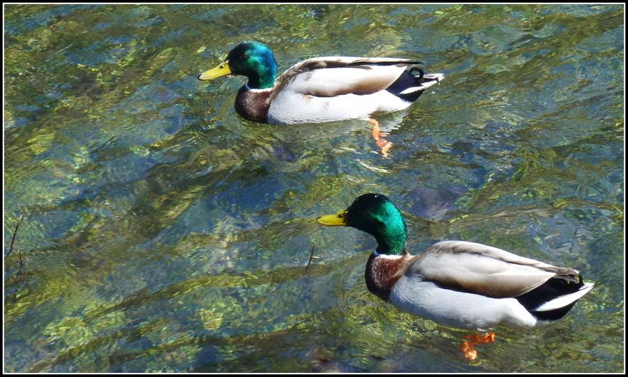 Idylle au lac des Ilettes...??