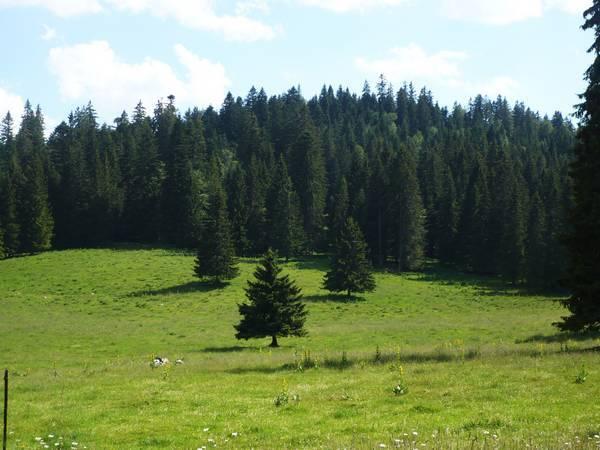 Petite-route-vers-la-Suisse.JPG