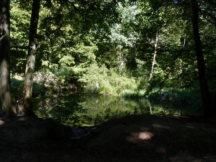 Étang dans la forêt