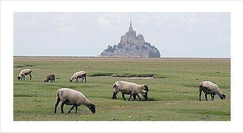 les moutons de pré salé
