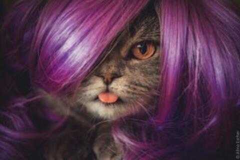 Le chat vous donne sa langue !