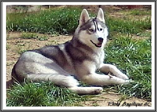 Jeska (9 mois)