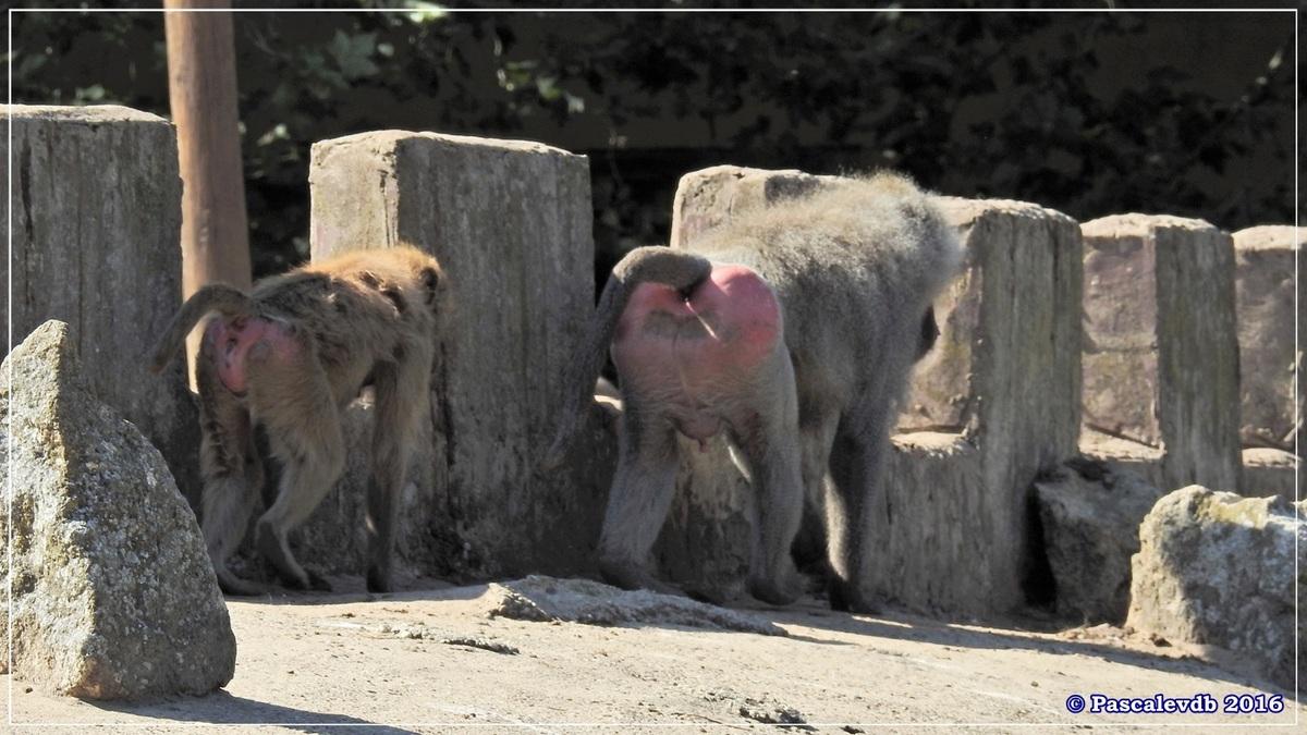 Zoo du Bassin d'Arcachon - Août 2016 - 12/15