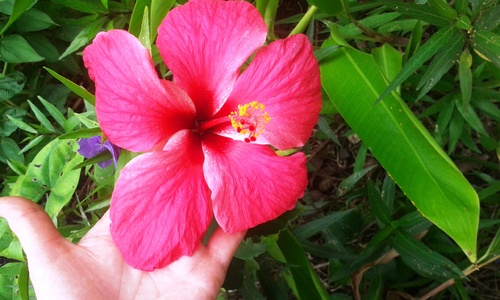Village d'antan Martinique 3