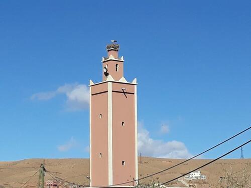 Demoiselle cigogne sur son minaret