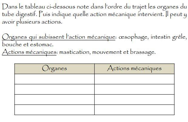 Bien-aimé L'appareil digestif - Ressources pour les enseignants de CM2 FO54