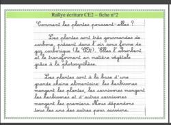 Rallye copie thème écologie CE1/CE2/CM1