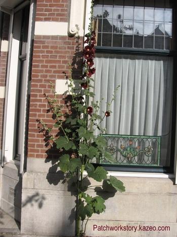 roses trémières 004-001