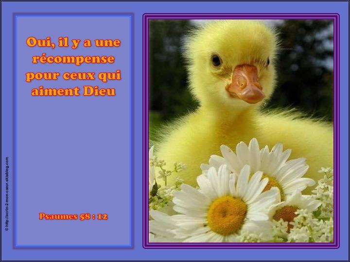 Il y a une récompense pour ceux qui aiment Dieu - Psaumes 58 : 12