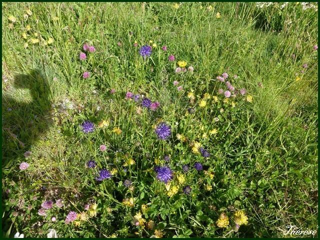 Flore du Grand Colombier (20)