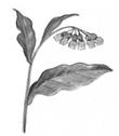 Les plantes médicinales des guérisseurs
