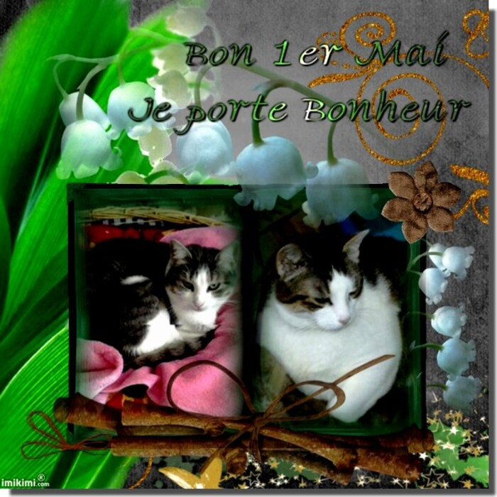Mes Chatmours