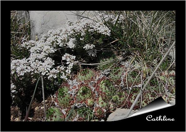 iberis-nain--22-avril-2012--mont-serein--5.jpg