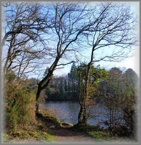 lac----arbre.jpg