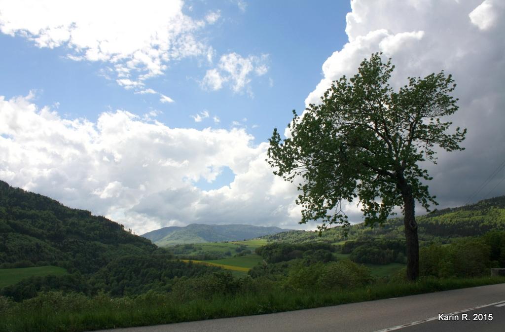 Un arbre, une route, un panorama
