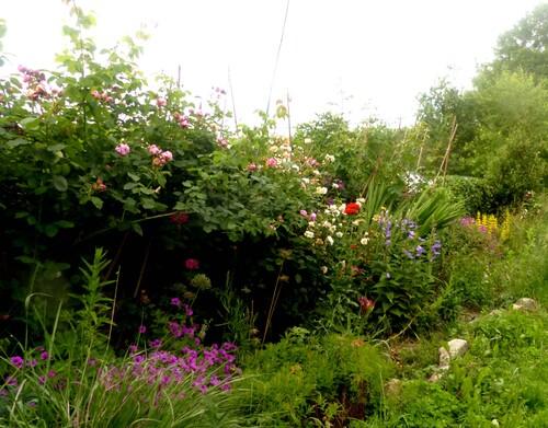 ça y est le jardin est au mieux de sa forme 2