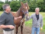 Attelages et chevaux de trait