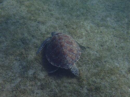 Voir et revoir des tortues