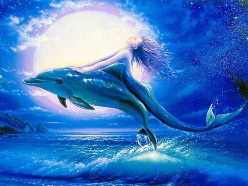 images de dauphin