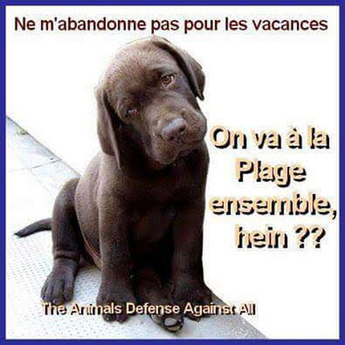 Images animaux en danger