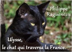 Ulysse, le chat qui traversa la France - Philippe Ragueneau