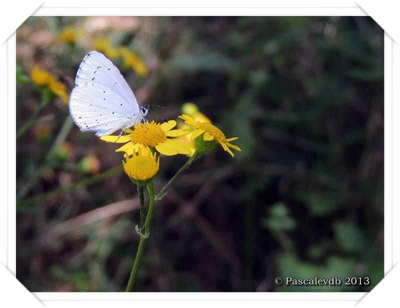 Pause ornithologique estivale au Teich - 11/12