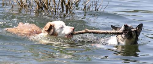 Baignade au lac !