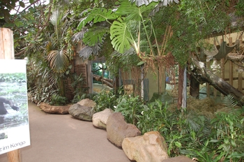zoo cologne d50 2012 113