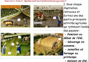 Les campagnes dans l'Occident médiéval ( XIe - XVe siècle)