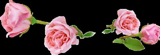 ♥ rose de novembre ♥