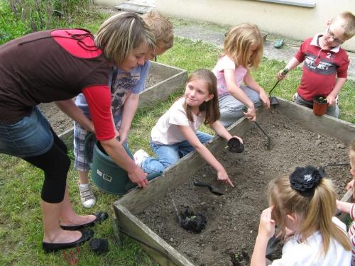 Jeudi 1er juin, nous avons planté des tournesols