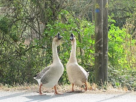 les-oiseaux-et-autres-volatiles-7951.JPG