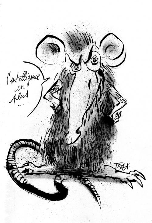 rats,humains, intelligence