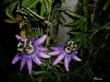 Fleurs d'automne (15)