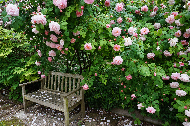 Escapade en alsace le jardin de marguerite le jardin for Les idees de mon jardin