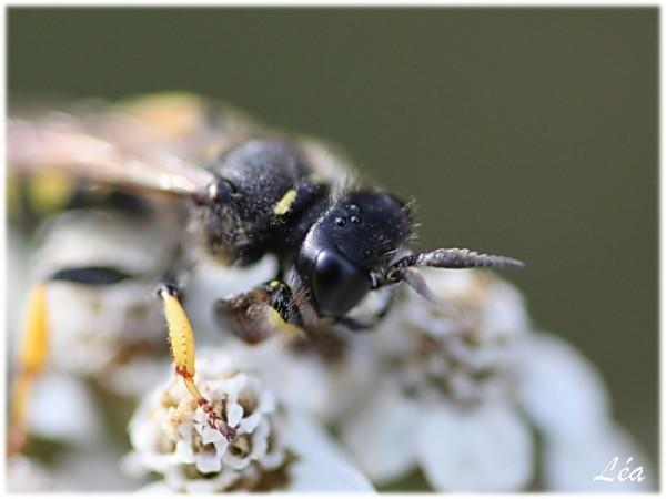 Insectes-2-2090-vision-sur-une-abeille.jpg