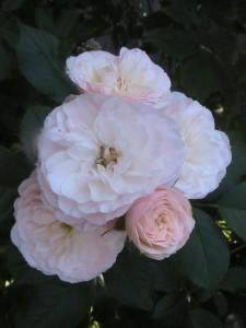 Bouquet Parfait7